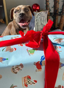 Paralyzed puppy gets Christmas wish