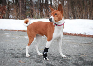 Front No-Knuckling Training Sock for dog's dragging front paws