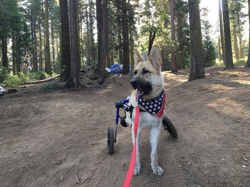 Blitz, Hiking Wheelchair