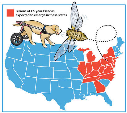 Map of the Brood 10 Brood X Cicada state map