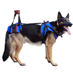 Lifting harness for large dog