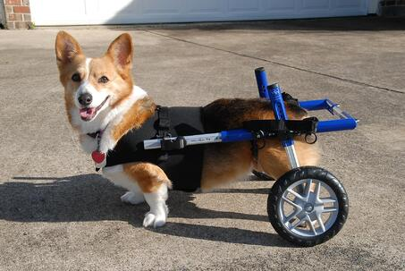 Corgi Blue Corgi Cart