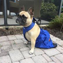 Laceythefrenchie23
