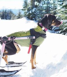 Keep your dog warm in cold weather