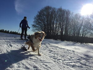 Dog skis for wheelchair