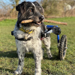 Dog wheelchair promotes healthy life