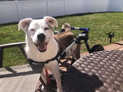 Dog with DM happy and healthy
