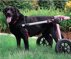 Dog wheelchair for arthritis