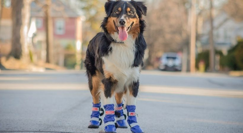 How to Choose the Right Boots For Your Pet!
