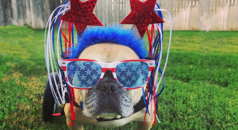 Keeping Your Pet Safe on July 4th