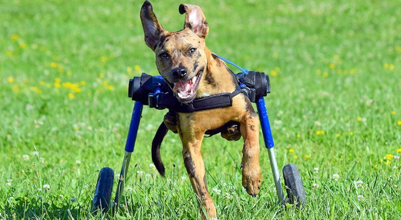 Changing Your Dog's Life with a Dog Wheelchair