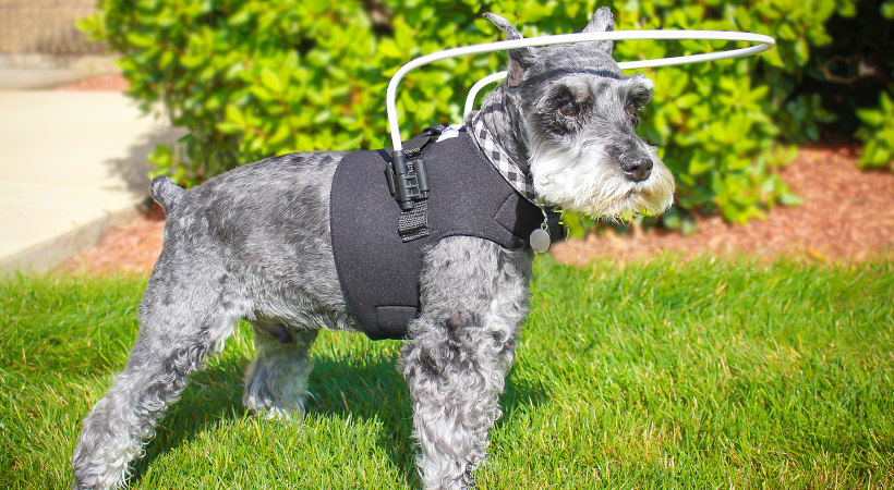 Help Your Pet Adapt to Sudden Blindness