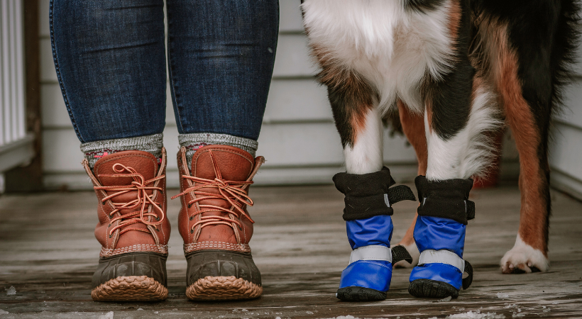 Does My Handicapped Pet Need Boots?