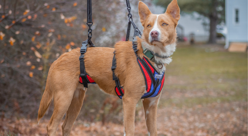 Get a Handle on Your Dog's Incontinence