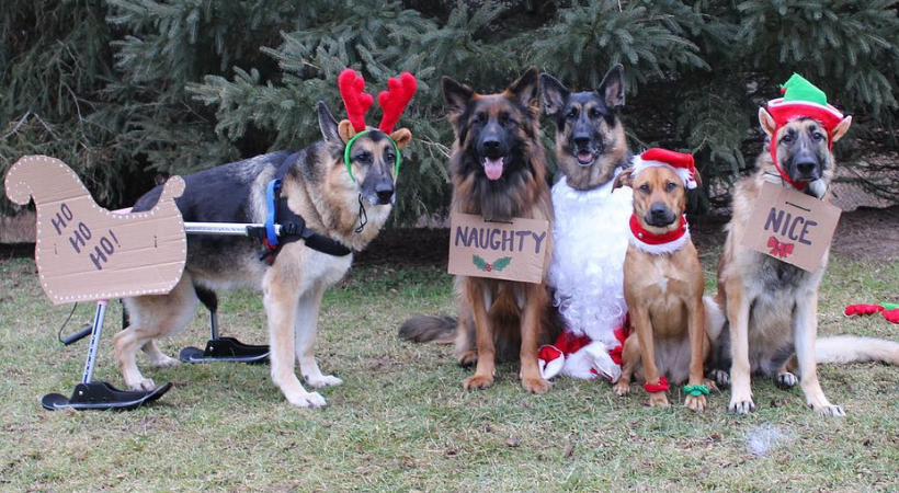 What Your Special Needs Pet Wants for the Holidays