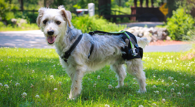 Hip Braces for Dogs