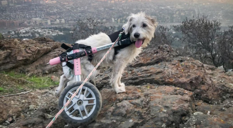 Safely Hike With Your Dog!